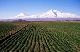 Perché è necessario tenere Monsanto alla larga dall'Armenia